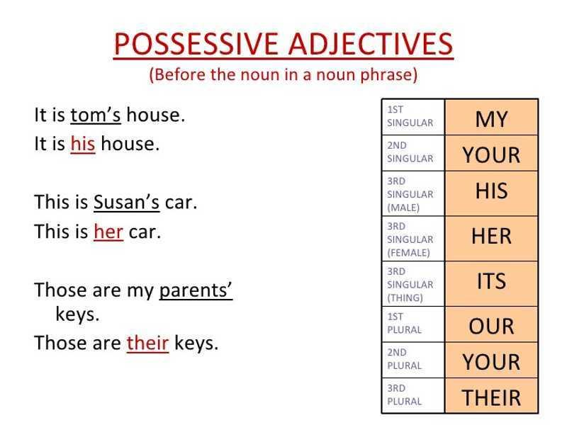 Aggettivi Possessivi in Inglese