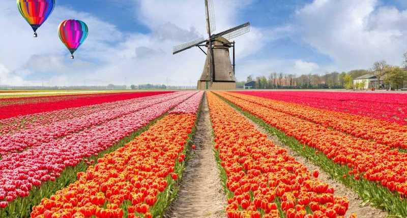 Primavera in Inglese